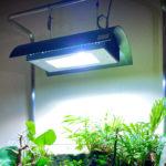 LED/蛍光灯/メタハラ 水草水槽のライトを徹底比較 -アクアリウムに最適な照明は?