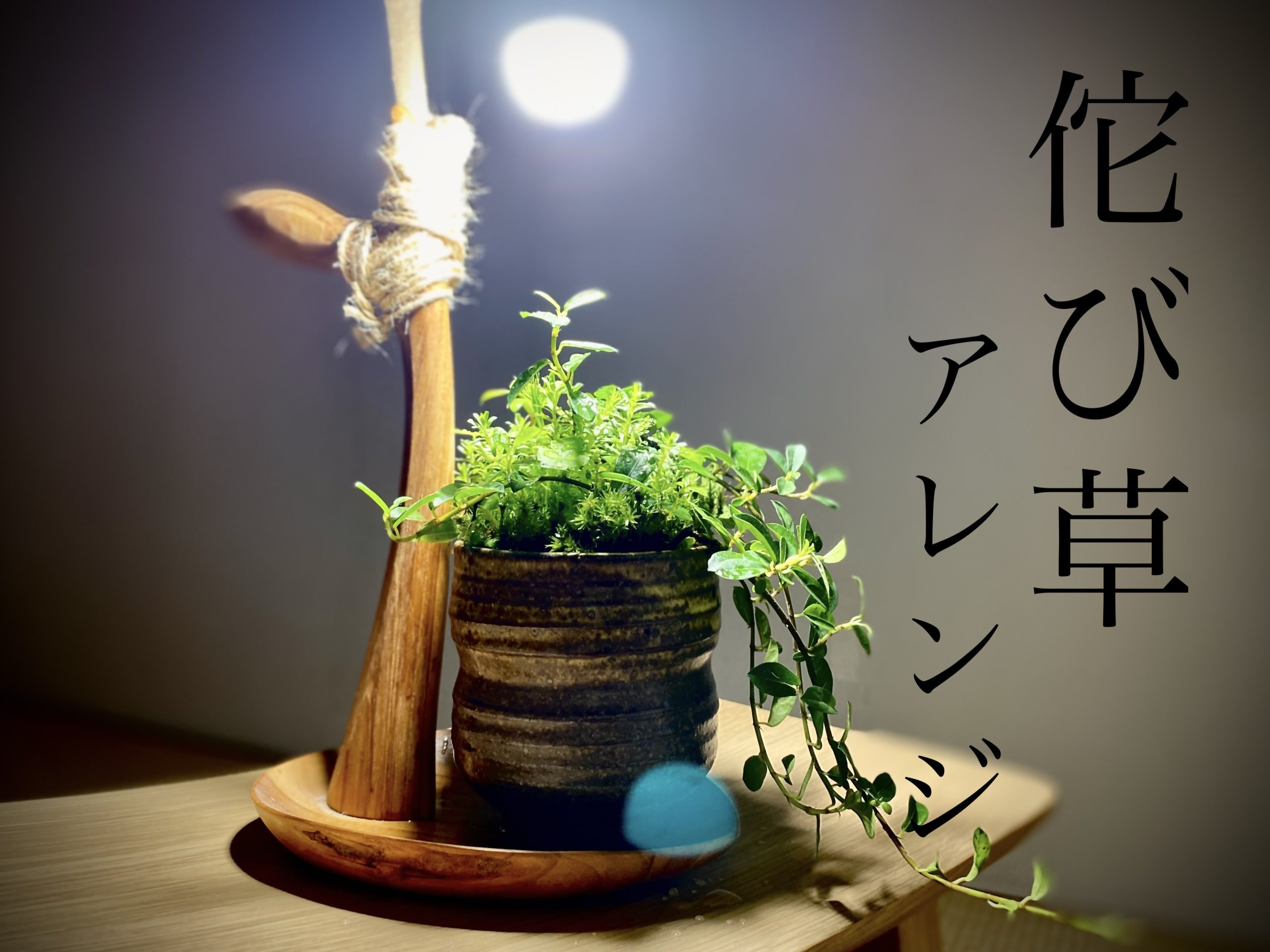 バーチャルギャラリー No.2 侘び草 水上葉アレンジメント