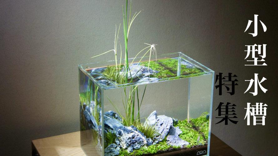小型水槽でもここまでできる! 水草レイアウト作例集