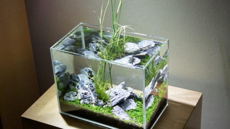 メダカに合う! 抽水植物と水草で作るインドアビオトープで癒されよう